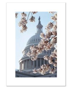 US Capitol in Springtime