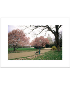 Springtime at the US Capitol blank cards