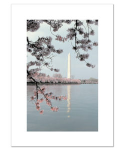 Washington Monument in Springtime