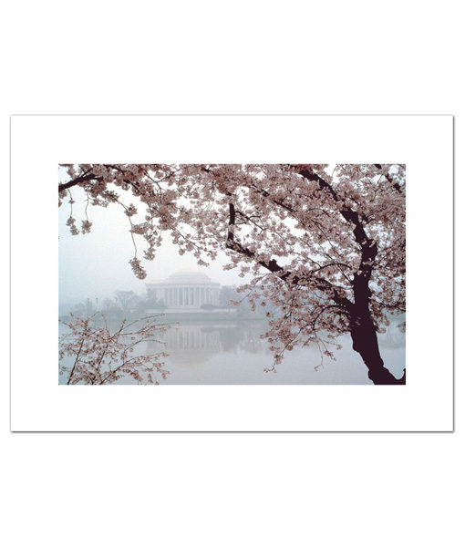 Jefferson Memorial Cherry Blossoms blank card